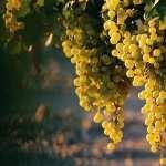 Grapes full hd