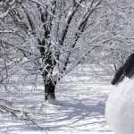 Snowman Photography hd photos