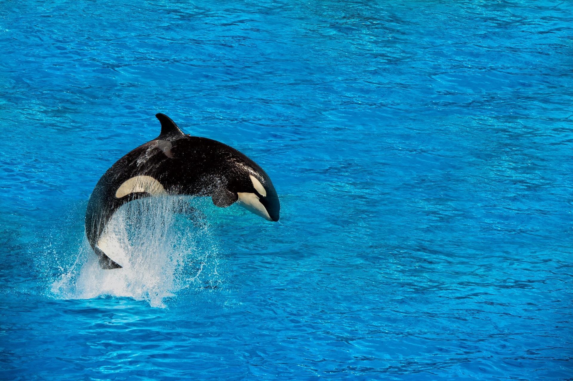 عکس نهنگ کارتونی
