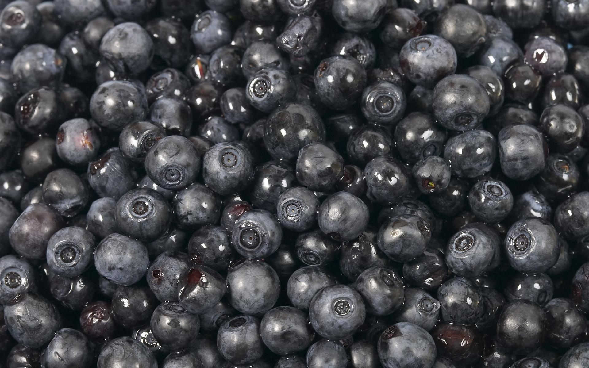 Blueberry wallpapers HD quality