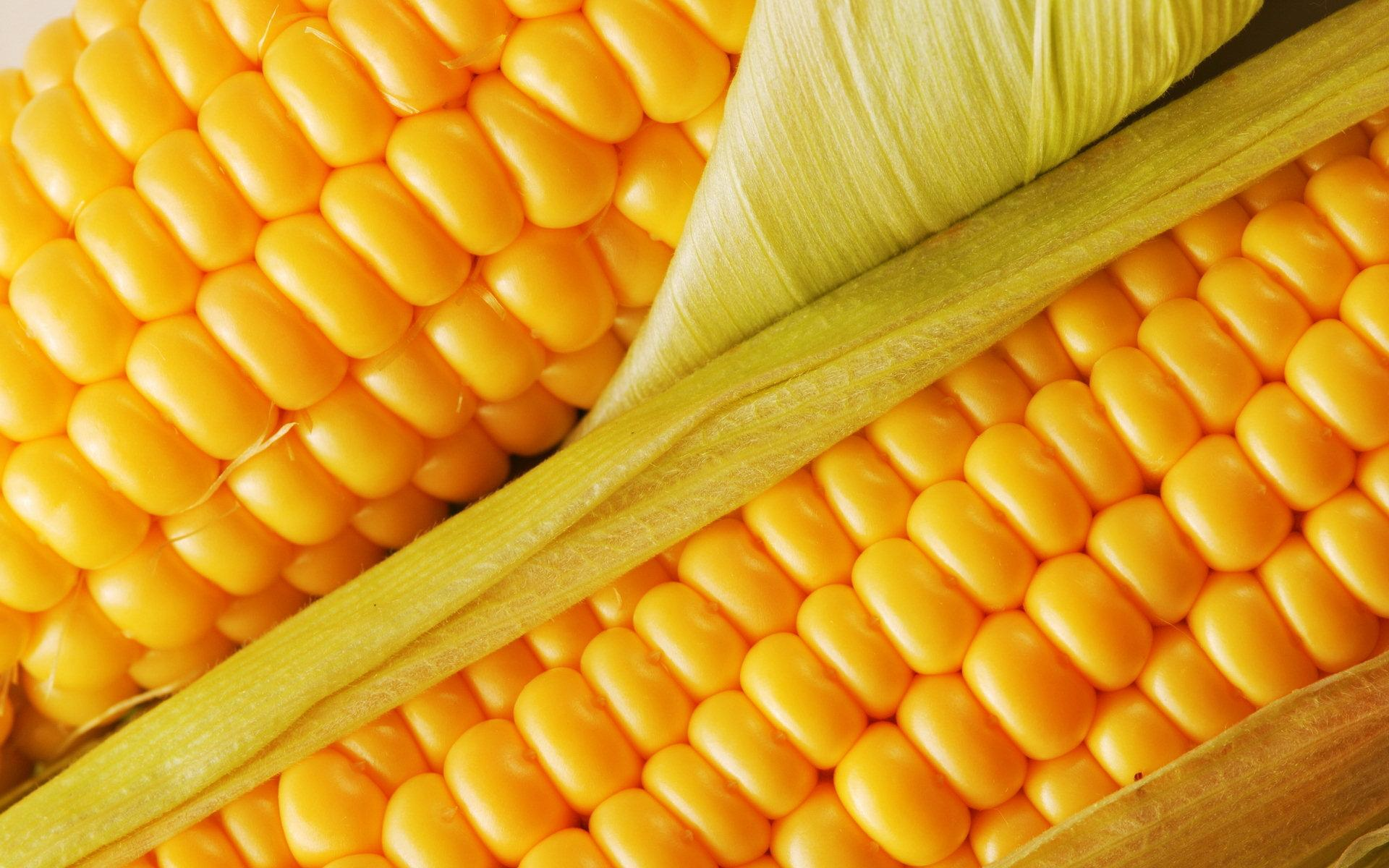 Corn wallpapers HD quality