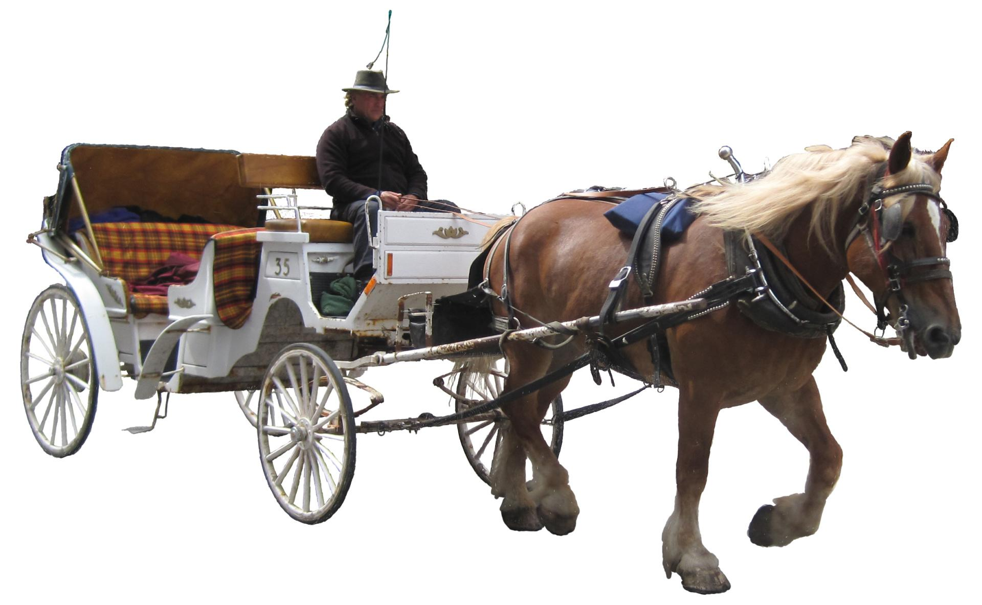 Horse Drawn Vehicle wallpapers HD quality