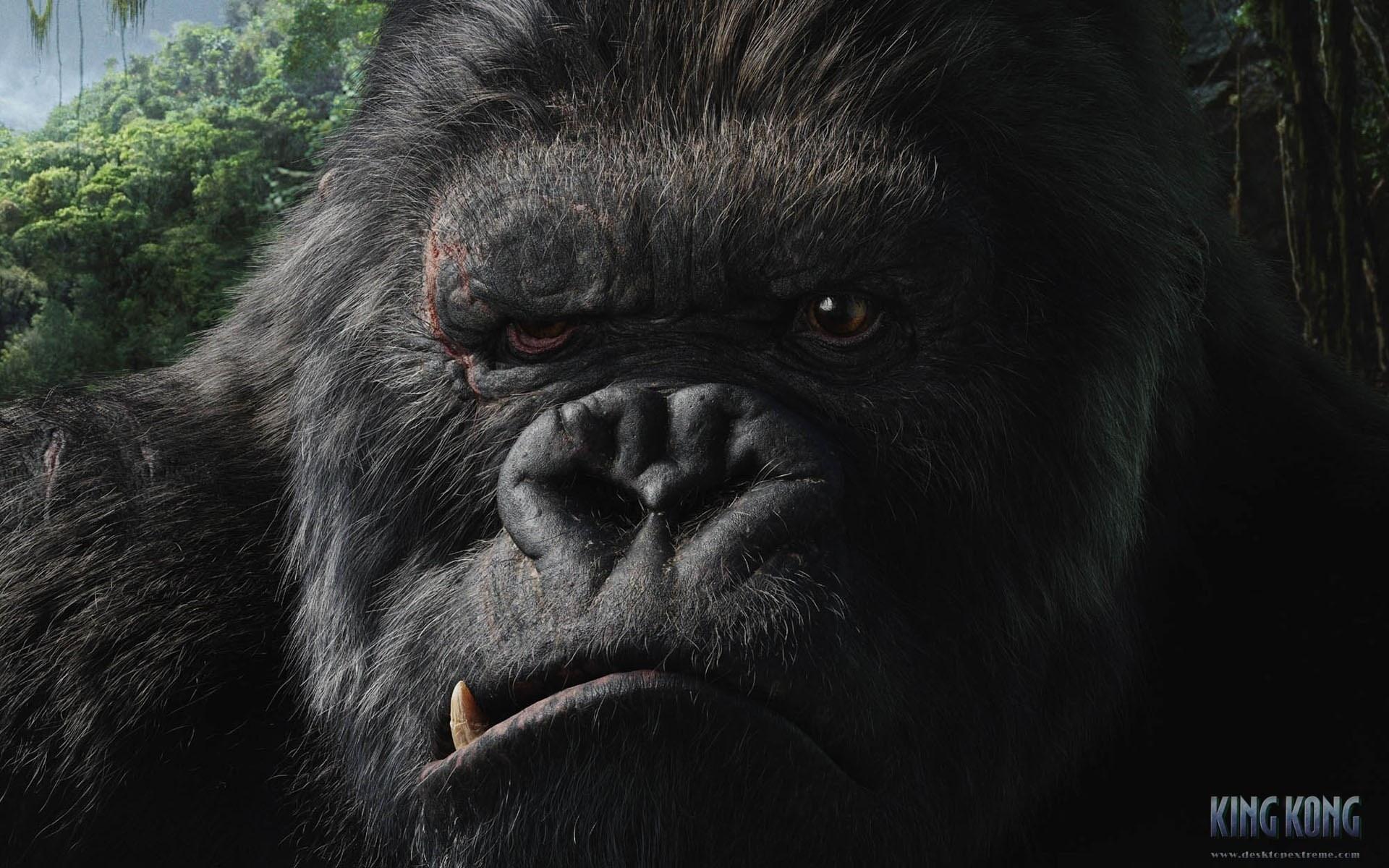 King Kong (2005) wallpapers HD quality