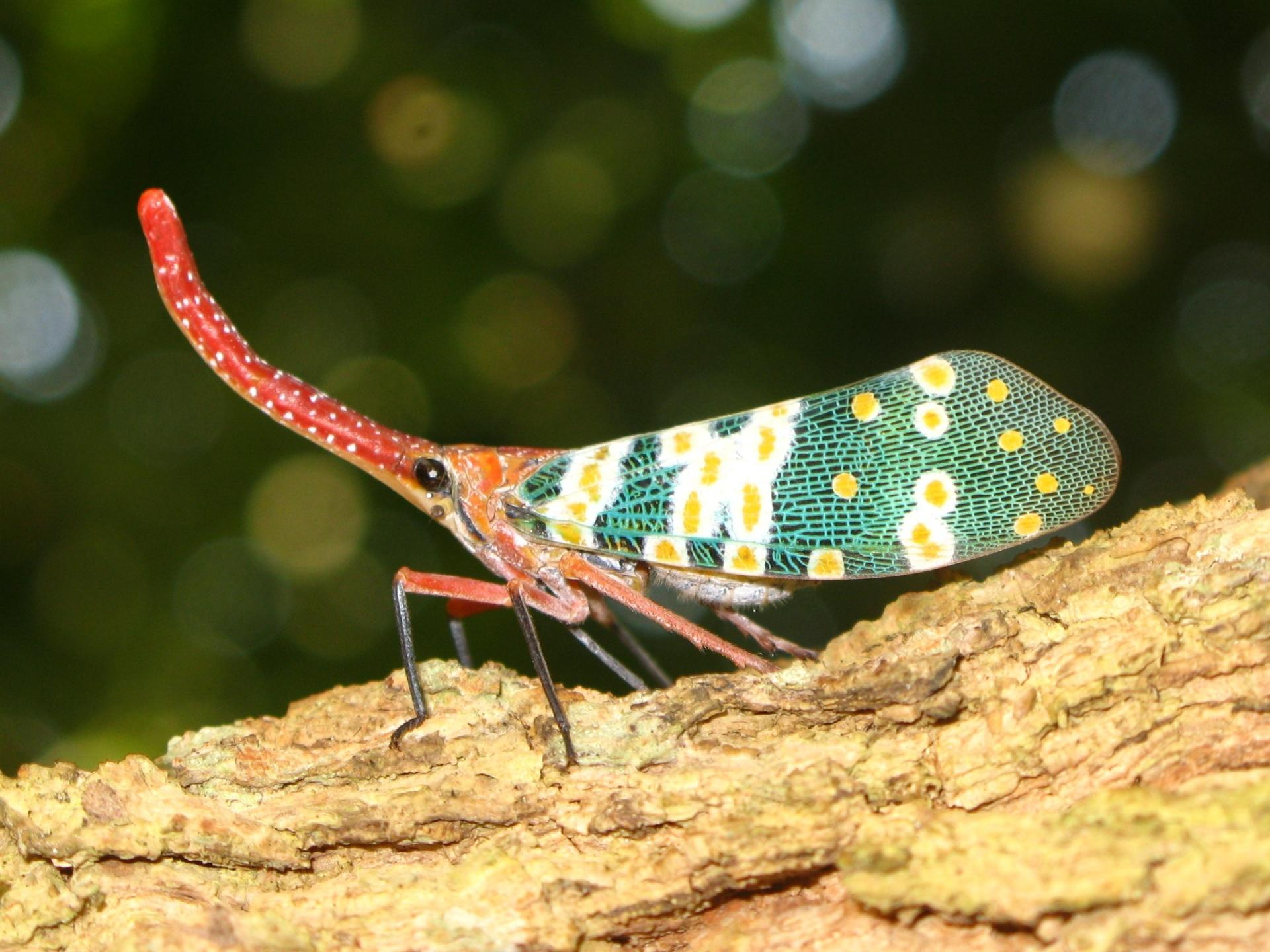 Lantern Fly wallpapers HD quality
