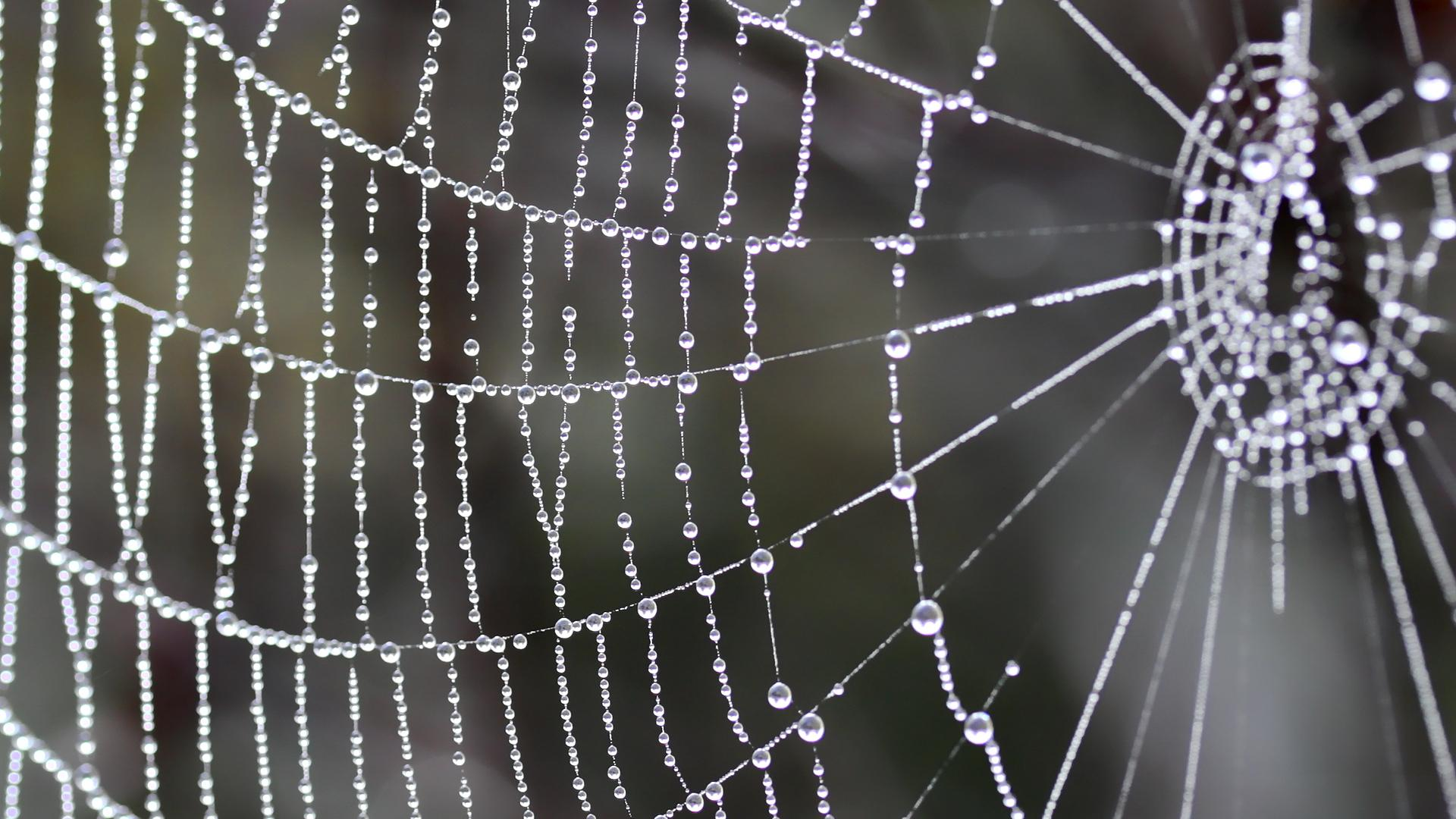 Spider Web wallpapers HD quality