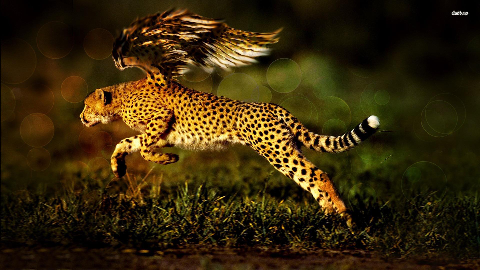 All Animals Wallpaper: Fantasy Animals Wallpaper HD Download