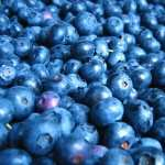 Blueberry download