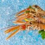 Shrimp pics