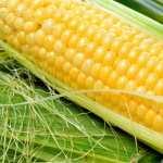 Corn desktop