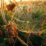 Spider Web hd desktop