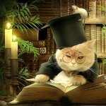 Cat Fantasy free