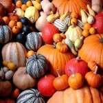 Pumpkin new wallpapers