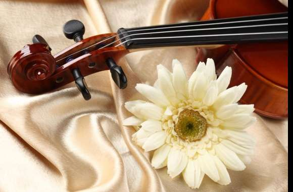 Violin wallpapers hd quality