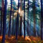 Forest Artistic images