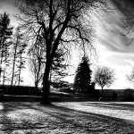 Black and White Photo desktop