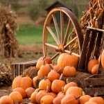 Pumpkin full hd