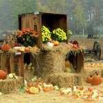 Pumpkin pics