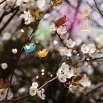 Cute Photography wallpapers for iphone