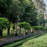 Borobudur download wallpaper