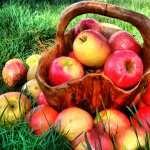 Apple Food image