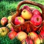 Apple Food image