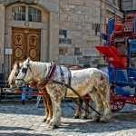 Horse Drawn Vehicle 2017