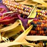 Corn free