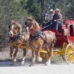 Horse Drawn Vehicle pic