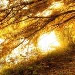 Nature Photography new photos