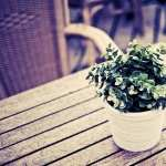 Plant Photography high quality wallpapers
