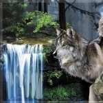 Wolf Fantasy image