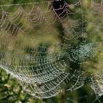Spider Web high definition wallpapers