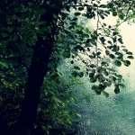 Rain Photography wallpapers hd