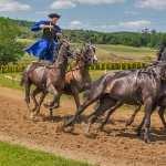 Horse Riding 1080p