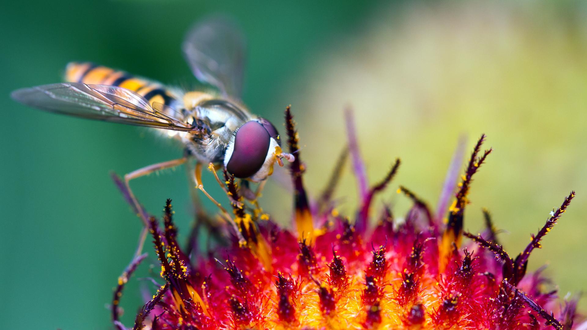 ромашка пчела опыление онлайн