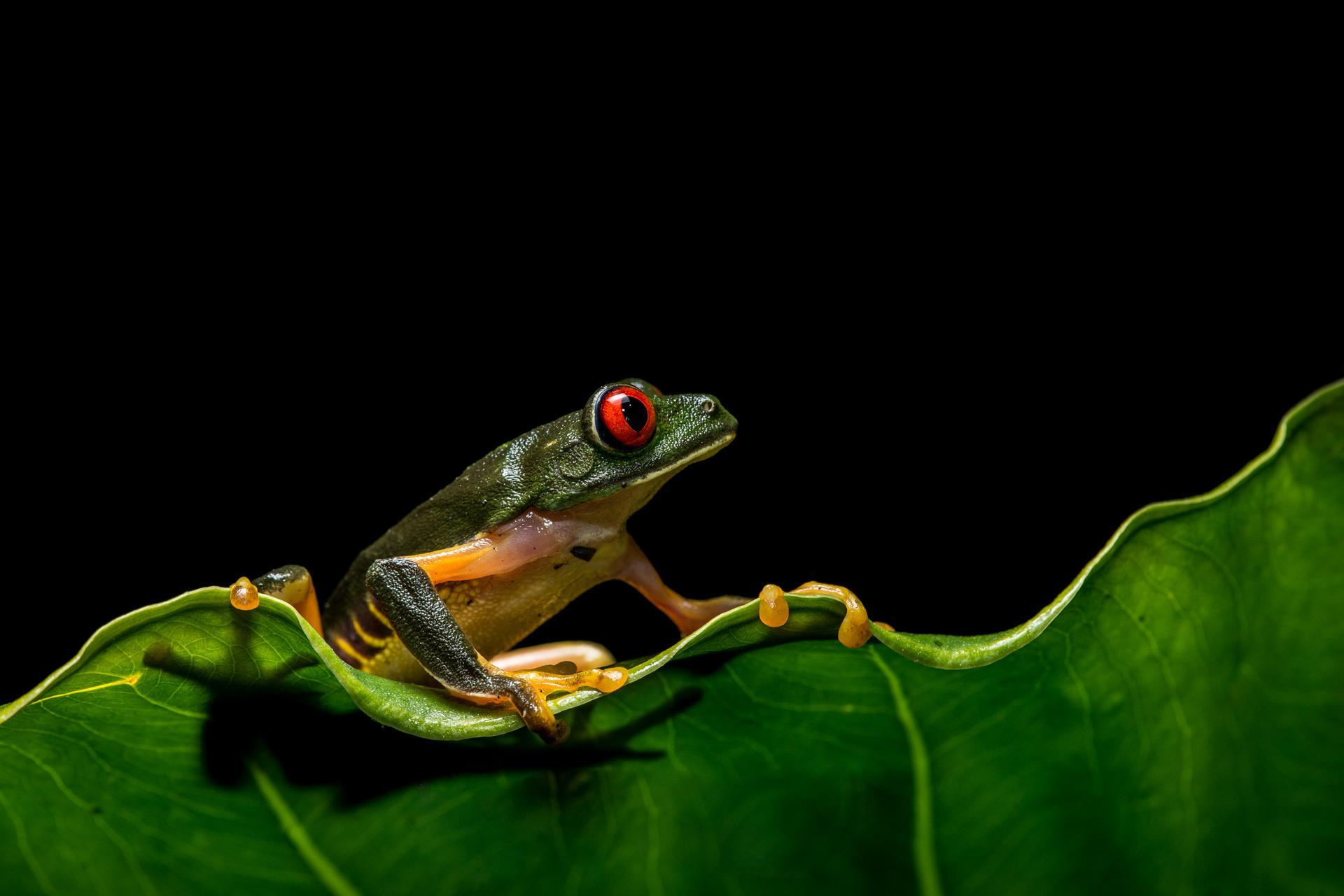 жаба лист фон  № 3164616  скачать