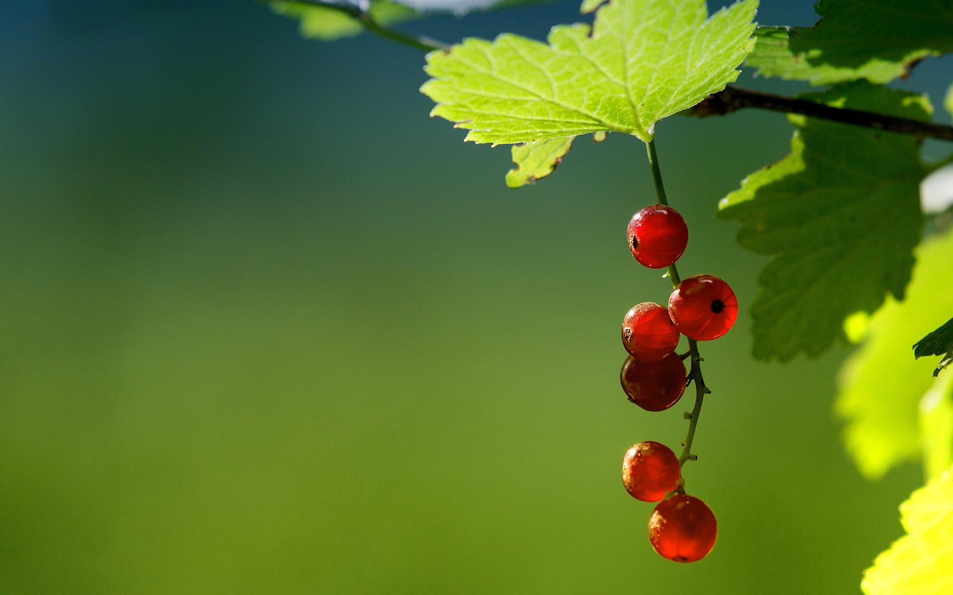 Currant wallpapers HD quality