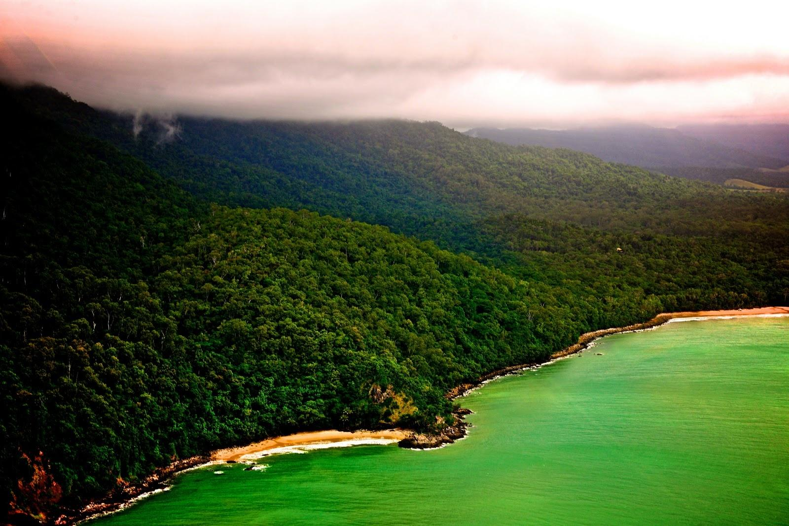 Daintree Rainforest wallpapers HD quality