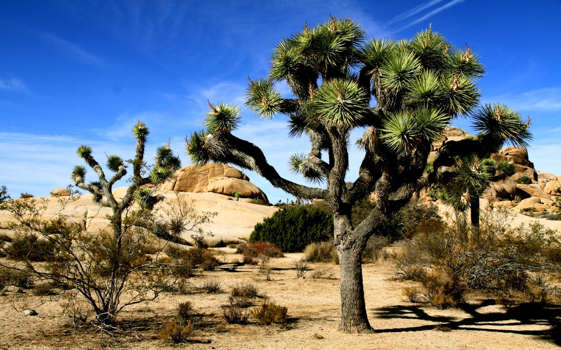 Joshua Tree National Park at 1152 x 864 size wallpapers HD quality