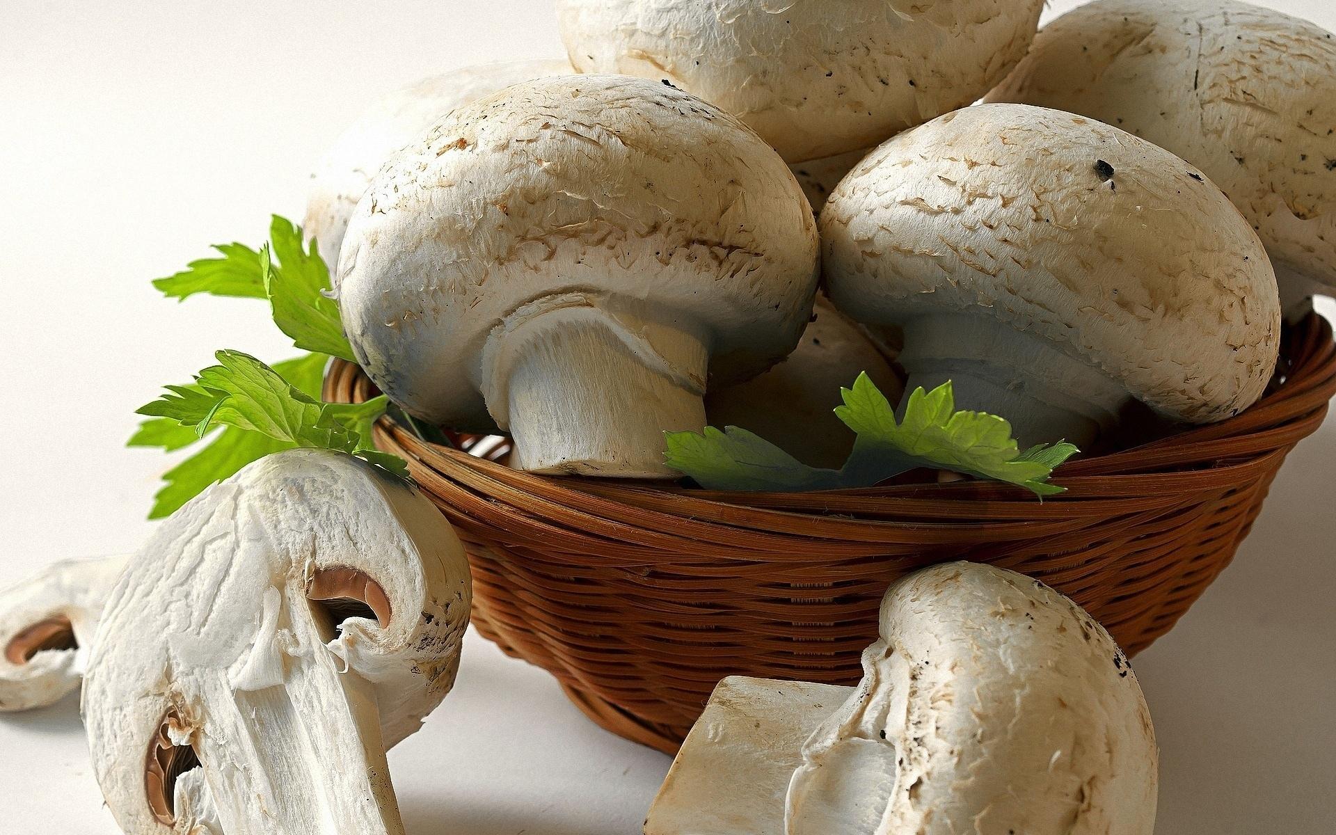 Mushroom wallpapers HD quality