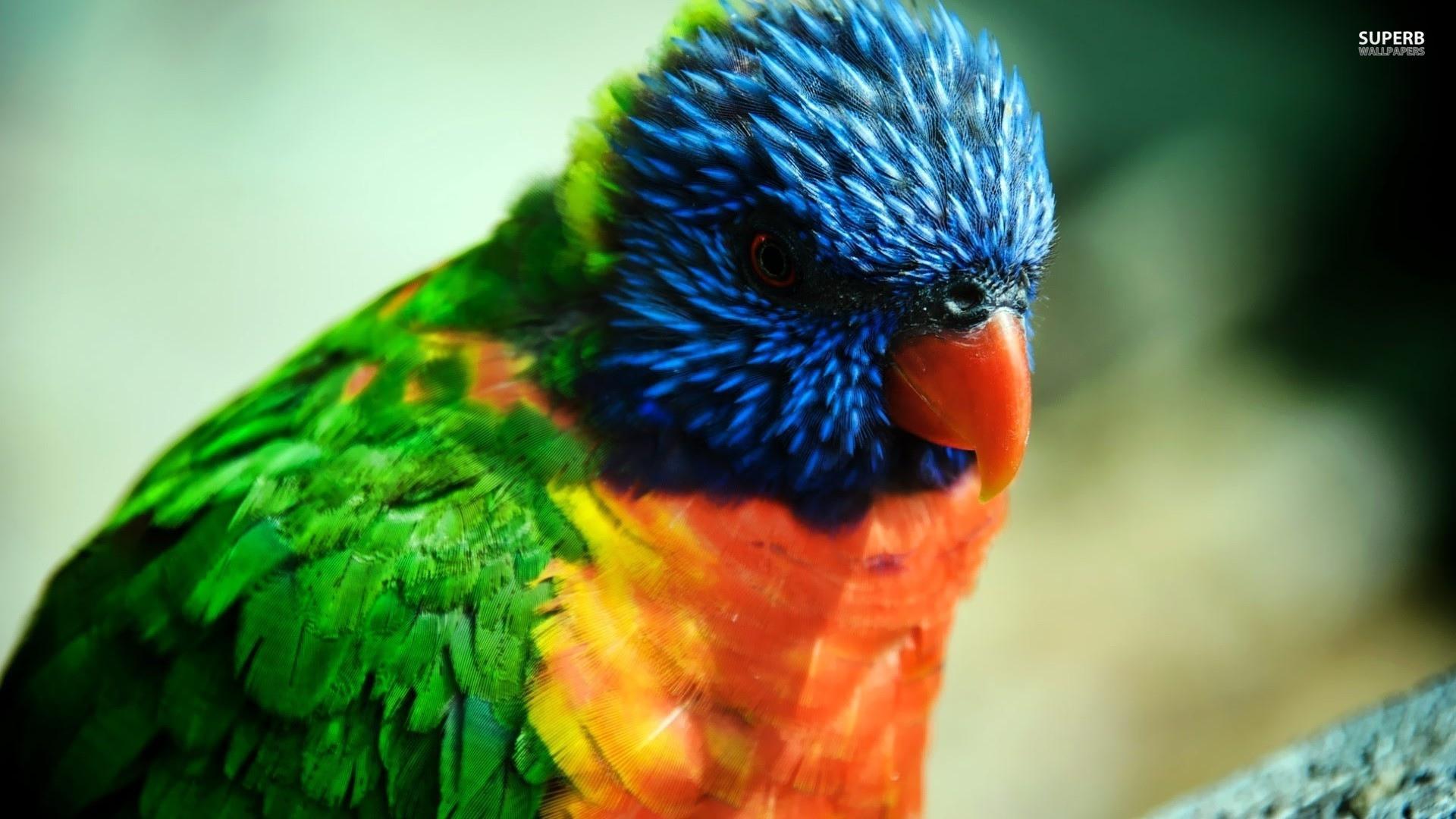 попугай макро деревья  № 737578 бесплатно