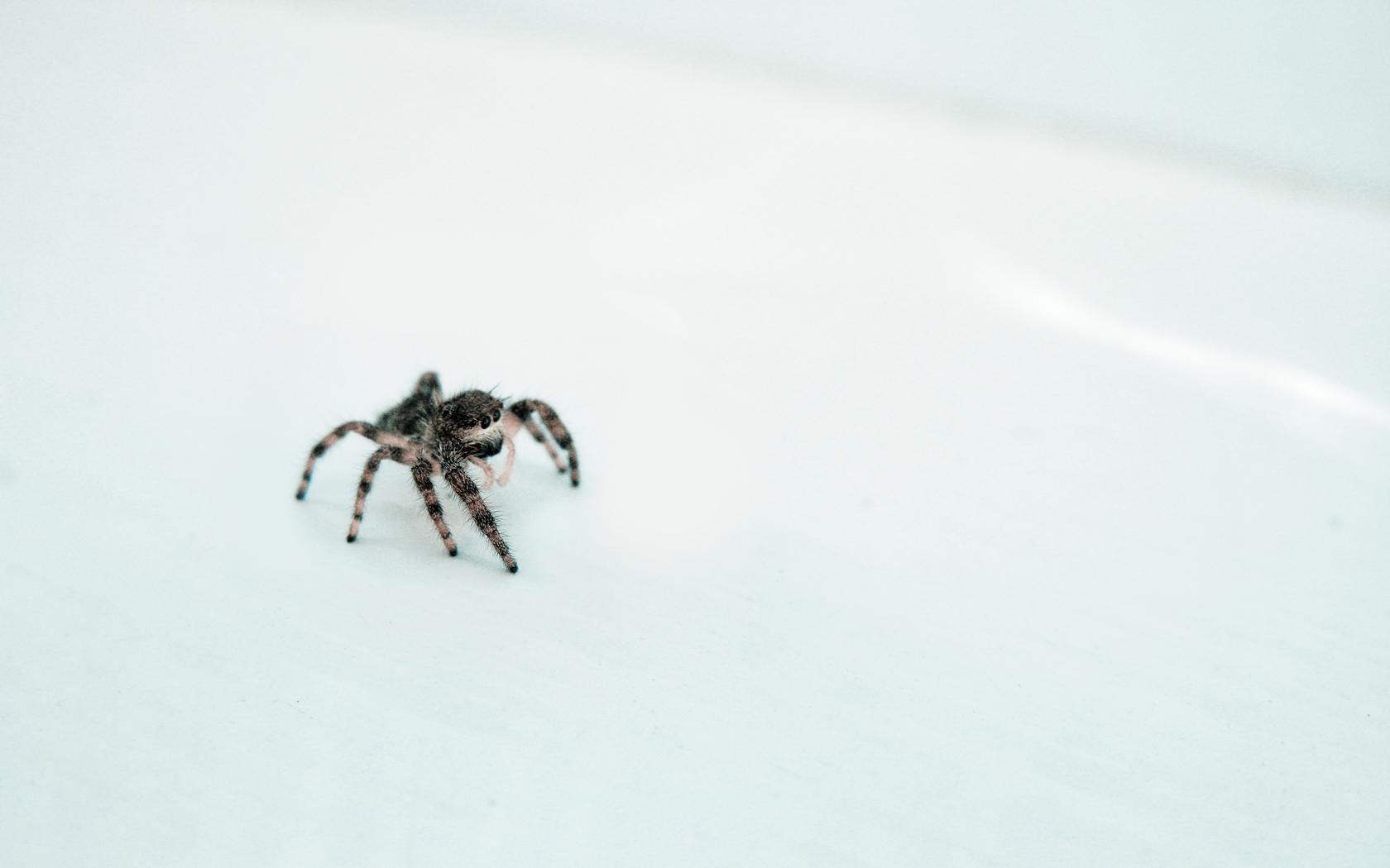 Лампа-паук бесплатно