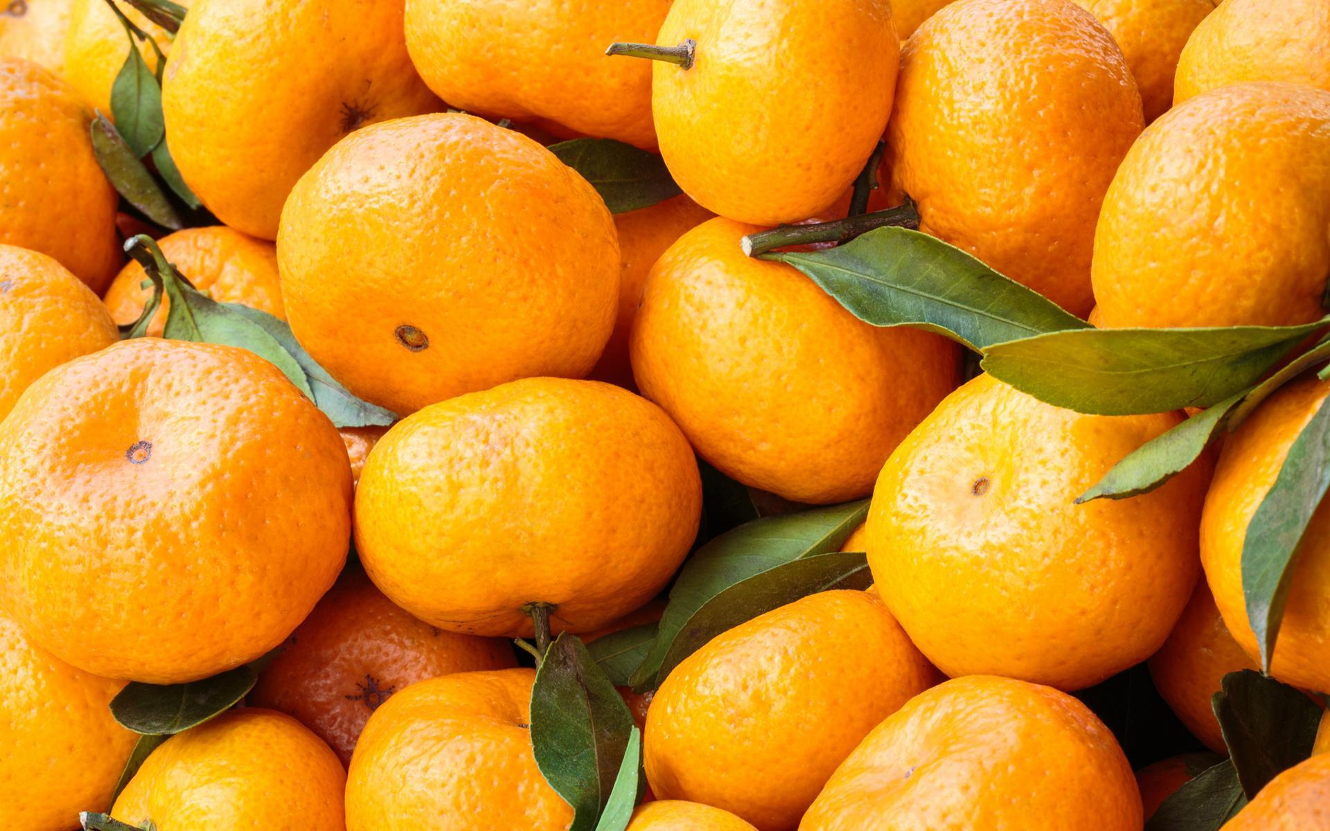 Orange food wallpaper hd download - Cuisine orange ...