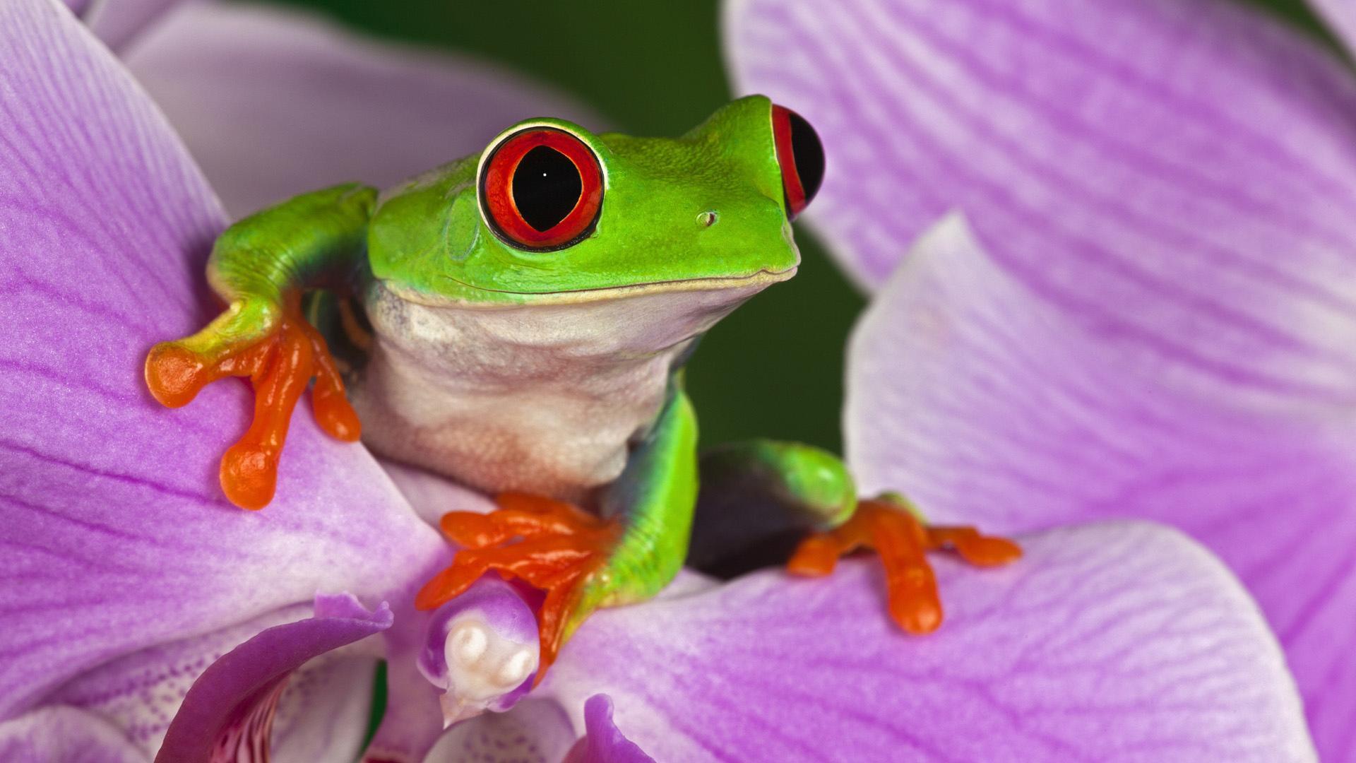 природа цветы животное лягушка  № 3068677  скачать