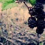 Blackberry Food hd pics