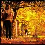 Fall Photography high quality wallpapers