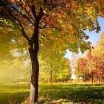 Tree hd pics