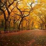 Fall Photography hd
