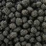 Blackberry Food new wallpaper