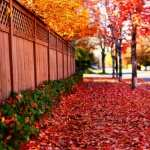 Fall Photography pic